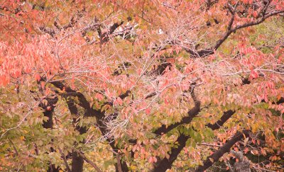 7Hiroshima_.._11-16-.jpg