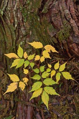 Mie_leaves..22-09_3.jpg