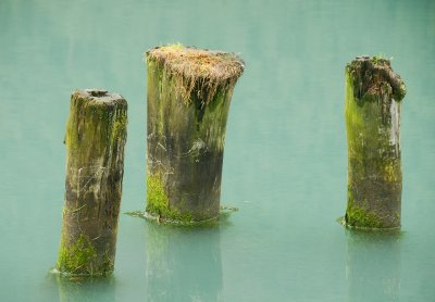 Stumps_07 29 09_2258_edited-2