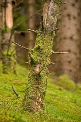 Treestump_..dited-2.png