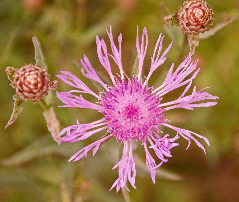Flower_07 25 09_2199_edited-2