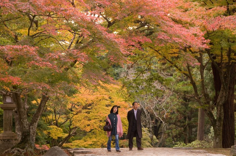 large_Kyoto-_-Na..ees_cou.jpg