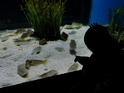 Ylla pointing at some bizarre sea creatures in the aquarium