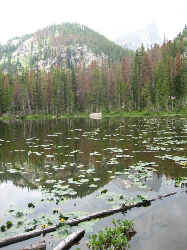 Bear Lake Lily Pads