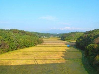 RiceField4.jpg