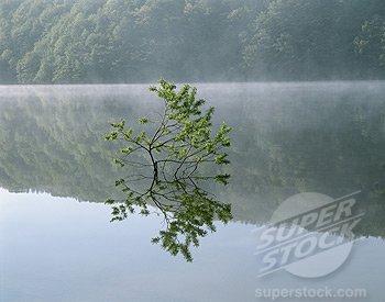 SuperStock..R-45837.jpg