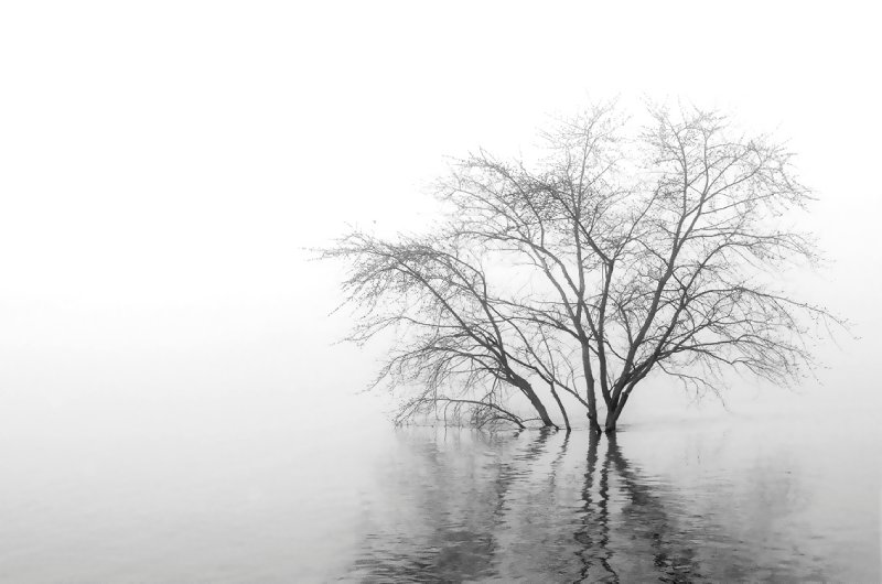 tree-in-water-and-fog-1-20111