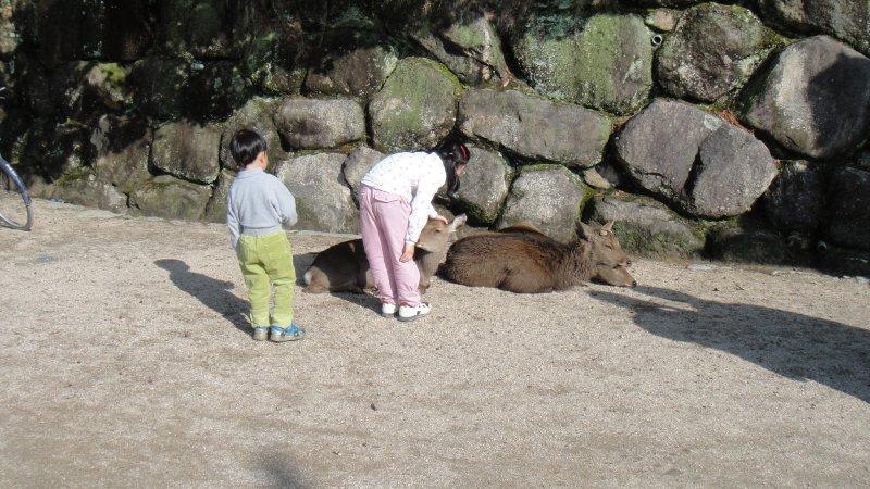large_A_little_g..iyajima.jpg