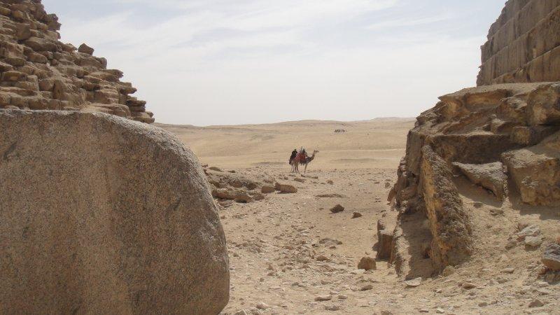large_Camels_in_Giza__Egypt.jpg