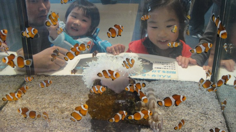 large_Clownfish_..__Japan.jpg