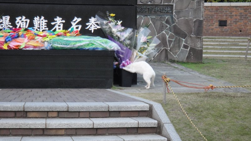 large_Feral_Cat_..agasaki.jpg
