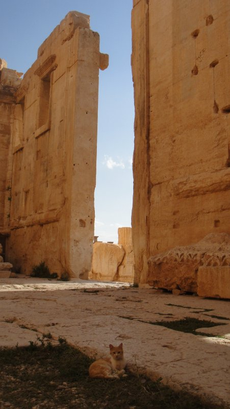 large_Gate_at_Ce..__Syria.jpg