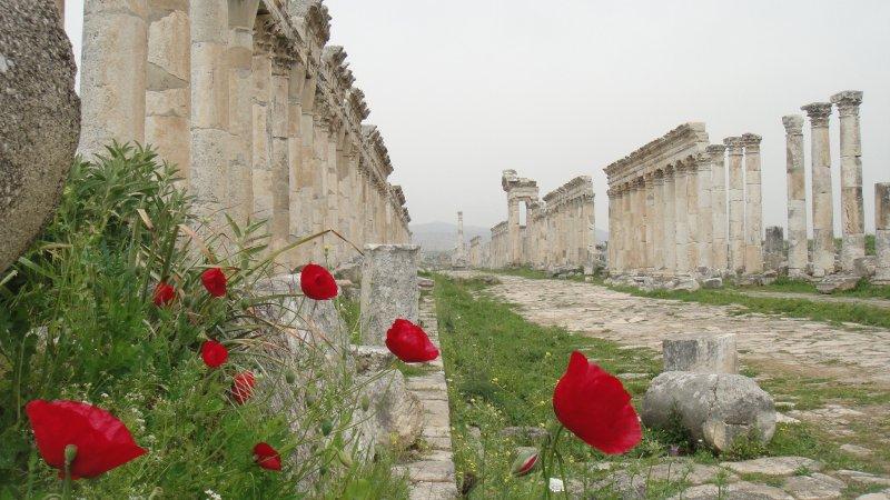 large_Red_Poppie..__Syria.jpg