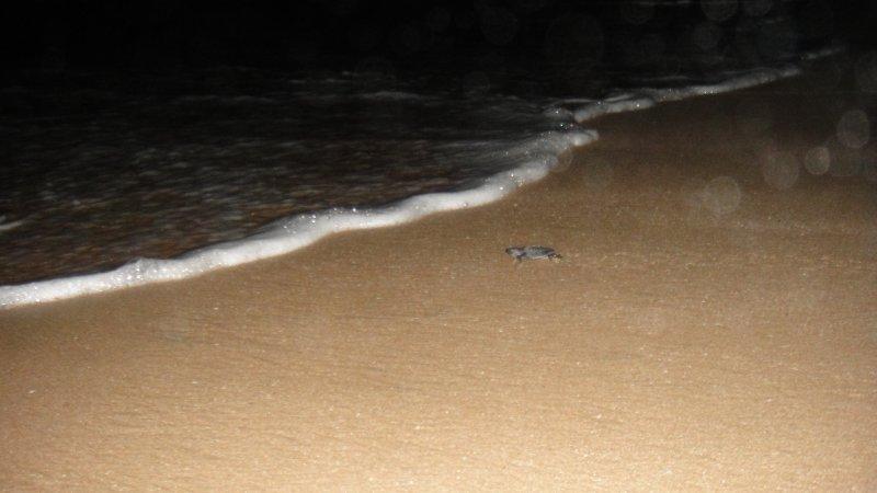 large_Turtle_rea..__India.jpg