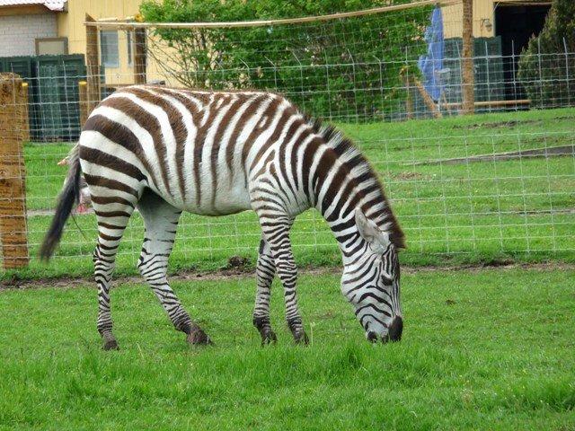 Grutos Parkas mini zoo