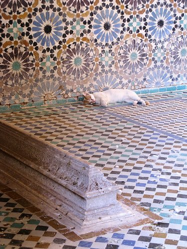 Marrakesh catnap in mosaic covered tomb