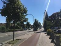 Hatertsweg Trees 2018