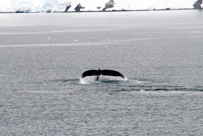 IMG_7195_whale_tale.jpg