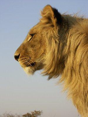 King_of_the_animal_world.jpg