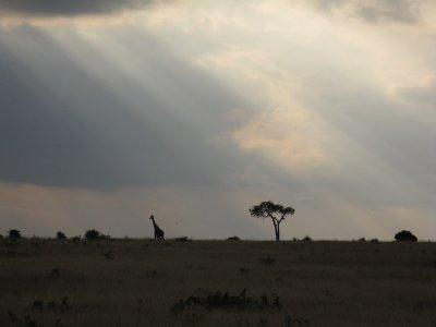 IMG_9423_G..__Kenya.jpg