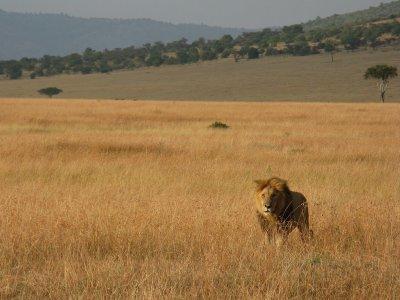 IMG_9765_L..__Kenya.jpg