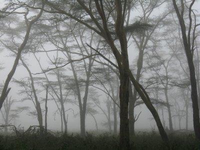 IMG_9790_L..__Kenya.jpg