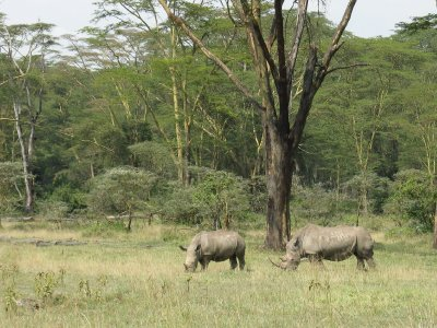 IMG_9854_W..__Kenya.jpg