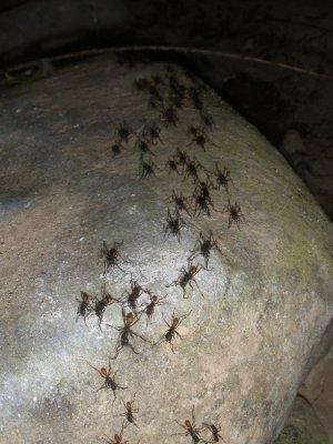 So many ants!!!!