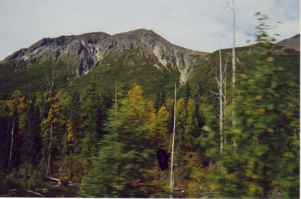 Wilderness from Alaska Railroad 2