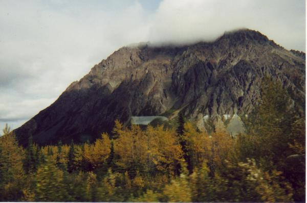 Wilderness from Alaska Railroad 3