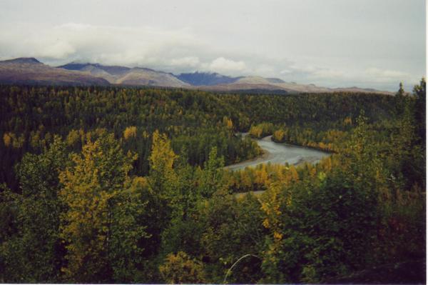 Wilderness from Alaska Railroad 4