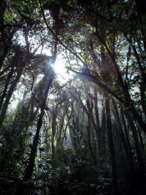 Sta Elena Cloud Forest