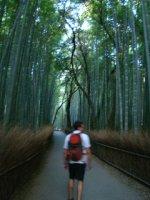 Bamboo_forest_01.jpg