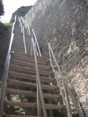 Arcas__Tikal_036.jpg