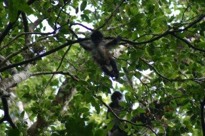 El_Mirador.._Monkey.jpg