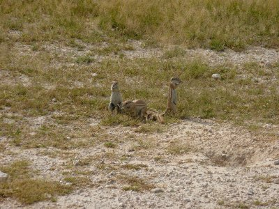 Cheeky little fellas in Etosha, Namibia