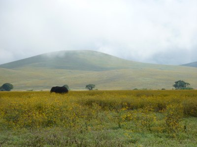 Elephant in the Ngorongoro crater