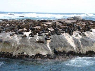 2_Seal_Island.jpg