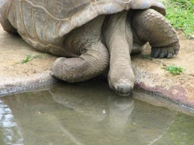 3_tortoise_drinking.jpg