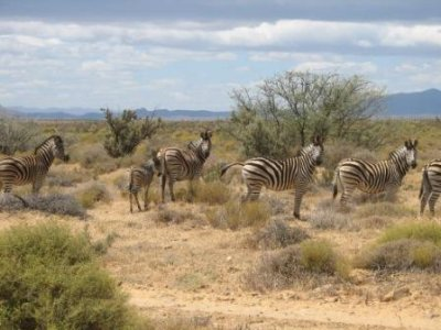 3_zebras.jpg