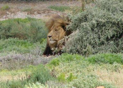 6_lion.jpg