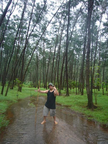 Anawangin forestry