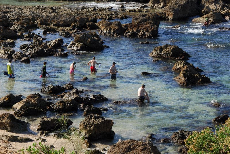 Snorkleing at Shark's Cove