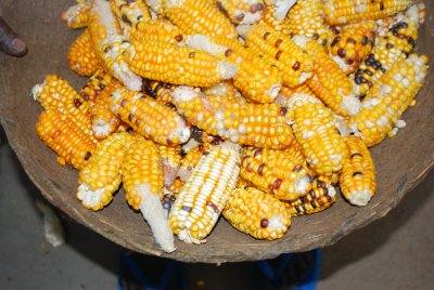 Colourful maize harvest,Asembo