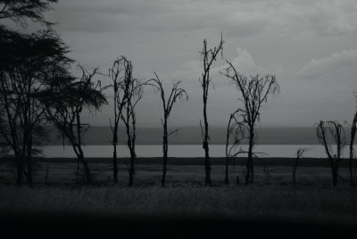 Eerie Trees