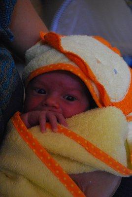 Amelie after first bath