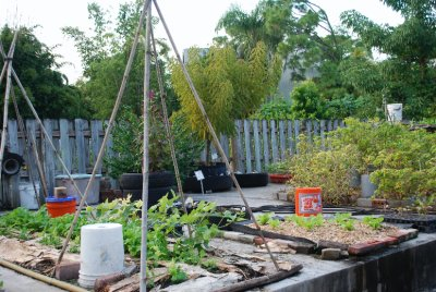 Urban Garden: growing plants in limited space