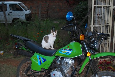 Dr Roger the cat is a bit of a speed-freak