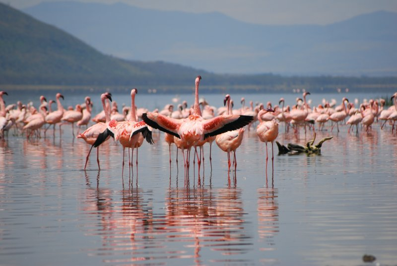 Flamingoes on show