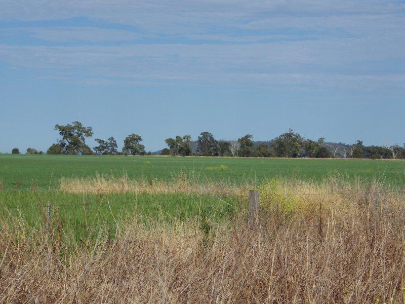 2013 Sep 15 Darling Downs Grain 2